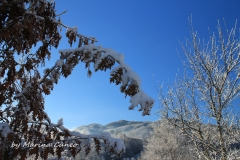 Liguria appenninica1